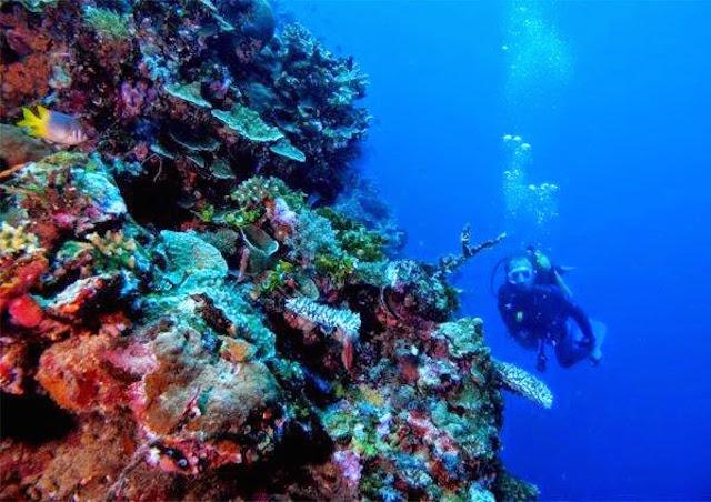 Taman Laut Olele, Gorontalo (sumber)