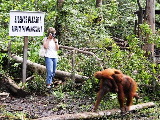 Taman Nasional Tanjung Putting, Kalimantan Tengah (sumber)