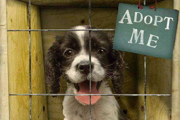 adopsi anjing di shelter